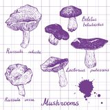 Set of linear drawing mushrooms Stock Image