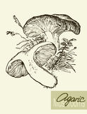 Set of linear drawing mushrooms, vintage vector Stock Photo