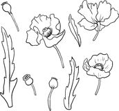 Set of linear drawing poppy flowers Stock Photos