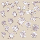 Set of linear drawing roses Stock Image