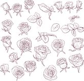 Set of linear drawing roses Royalty Free Stock Image