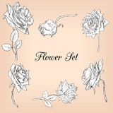 Set of linear drawing roses Royalty Free Stock Photos