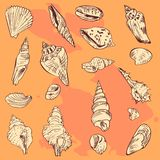 Set of linear drawing shells on orange background Royalty Free Stock Photo