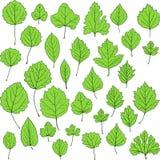 Set liniowi rysunków liście Zdjęcia Stock