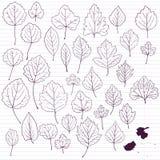 Set liniowy rysunek opuszcza przy prążkowanym papierem Zdjęcie Royalty Free