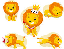 Set lion Royalty Free Stock Images