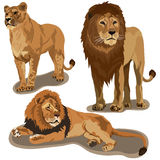 Set of lions Stock Photography