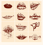 Set of  lips. Stock Photos