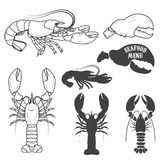 Set of the lobsters illustrations in vector. Royalty Free Stock Images