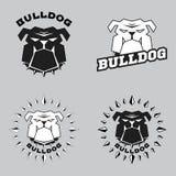 Set logo bulldog head. Vector illustration head ferocious bulldog Stock Photography