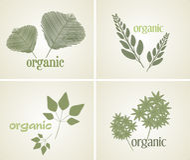 Set logo organic plant, vector Royalty Free Stock Images