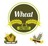 Set logo vector wheat factory. Circle green badge with gold. Ears on dark background. Flat design royalty free illustration