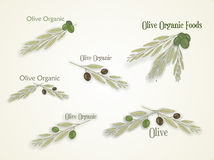 Set of logos for organic olive, vector Royalty Free Stock Images