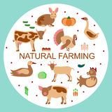 288_Set logotype eco farm. Set logotype eco farm in modern flat design. Perfect organic farm products banner or flyer. Vector illustration. eps 10 Royalty Free Stock Photos