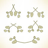 Set logowie gałąź z acorns Fotografia Royalty Free