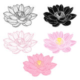 Set of lotus isolated on white background. Hand drawn  ill Royalty Free Stock Photography