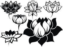 Set lotuses Obraz Royalty Free