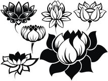 Set of lotuses Royalty Free Stock Image