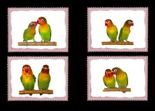 Set Lovebirds postage stamps,  birds Stock Photo