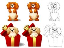 Cocker Spaniel in a gift box Stock Images