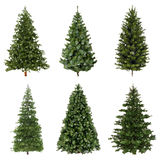 Set of low poly spruce. Stock Images