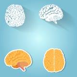Set ludzki mózg royalty ilustracja