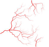 Set ludzkiego oka żyły, czerwoni naczynia krwionośne, krwionośny system tła ilustracyjny rekinu wektoru biel Fotografia Royalty Free