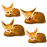 Set of lying sand foxes and one yawns. Vector Stock Images