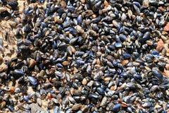 Set małe skorupy na piasku zdjęcia royalty free