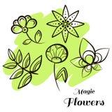 Set Magic Flowers Stock Photos