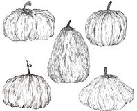 A set of magical pumpkins with patterns. Hand-drawn Liner Royalty Free Stock Photography