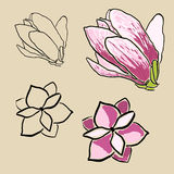 Set of magnolia flowers Stock Images