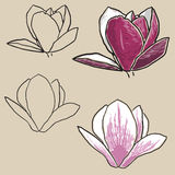 Set of magnolia flowers Royalty Free Stock Image