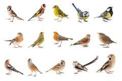 Set mali pieśniowi ptaki odizolowywający na białym tle zdjęcie stock