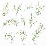 Set malująca akwareli wiosna opuszcza na białym tle Fotografia Royalty Free