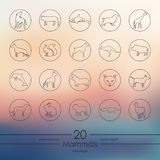 Set of mammals icons Royalty Free Stock Image