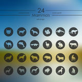 Set of mammals icons Stock Photo