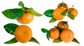 Set of mandarins with leaves, closeup. Collection of seven mandarins with leaves, closeup, isolated on white stock photography