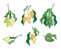 Set of Mango Fruits on White Background Background Stock Images