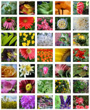Set of Many Colorful Blooming Flowers Stock Photos