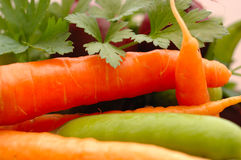Set of many different vegetables. Stock Images