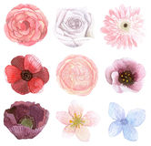 Set of many flowers Royalty Free Stock Photos