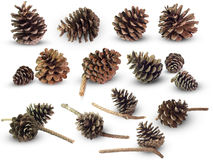 Set many of pine cone on isolate white background. Can be used to creative vintage style or decorate greeting cards stock photos