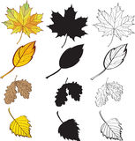A set of maple and birch leaves Royalty Free Stock Photography