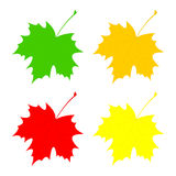 Set maple leaf. Stock Photography
