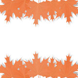 Set of maple leaves Royalty Free Stock Photo