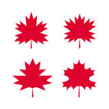 Set of maple leaves1 Royalty Free Stock Images