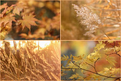 Set of maple leaves and meadow grass in fall. Royalty Free Stock Image