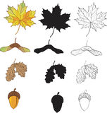 A set of maple and oak leaves Royalty Free Stock Image