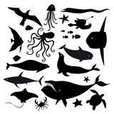Set of marine animals. Set of graphic marine animals on a white background Royalty Free Stock Photos